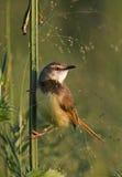 птица малая Стоковые Фотографии RF