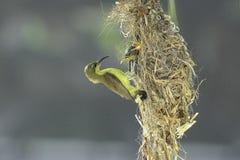 Птица матери подавая свой младенец Стоковые Изображения RF