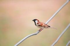 птица малая Стоковые Изображения