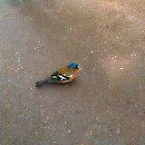 птица малая Стоковые Фото
