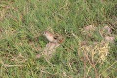 птица малая Стоковые Изображения RF
