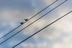 птица меньший силуэт Стоковые Изображения RF
