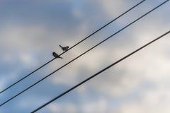 птица меньший силуэт Стоковое фото RF