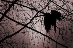 птица мертвая Стоковые Фотографии RF