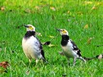 Птица мила и для предпосылки стоковое изображение