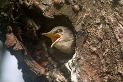 птица младенца Стоковое фото RF