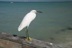 Птица моря на острове Sanibel Стоковое фото RF