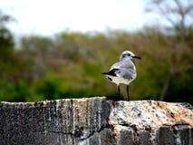 Птица моря стоковые изображения rf