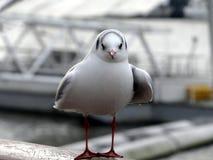 Птица моря Стоковое Изображение RF