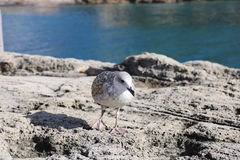 Птица моря стоковое фото rf