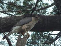 Птица молит наблюдать свое гнездо Стоковые Фото