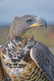 птица молит Стоковое Фото