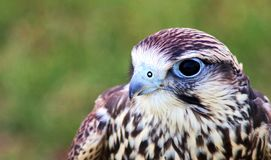 птица молит Стоковое фото RF
