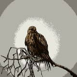 Птица Мультяшка Стоковая Фотография RF