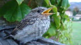 Птица младенца Стоковая Фотография RF