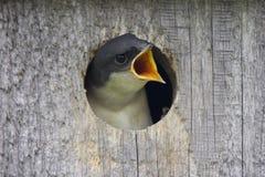 Птица младенца стоковое изображение