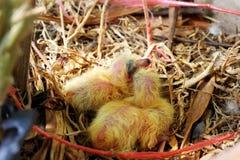 Птица младенцев Стоковые Фотографии RF