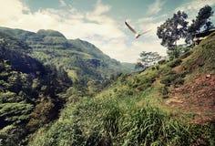 Птица над горами Стоковые Изображения RF