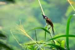 Птица наслаждаясь своей свободой Стоковое фото RF