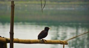 Птица на бамбуке стоковые изображения rf