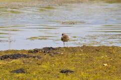 Птица на береге Стоковая Фотография