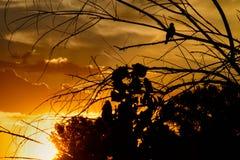 Птица на ветви на восходе солнца стоковое фото rf