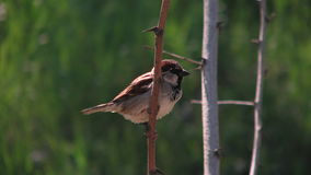 Птица на ветви в Одессе, Украине Стоковая Фотография RF