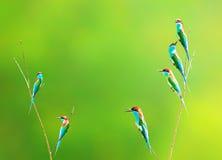Птица на ветви в луге леса Стоковые Фото