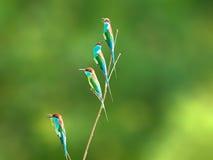 Птица на ветви в луге леса Стоковые Фотографии RF