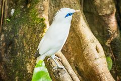 Птица на ветви дерева стоковые фотографии rf