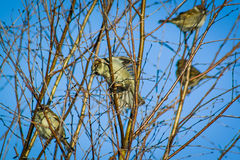 Птица на ветви фруктового дерев дерева Стоковые Изображения