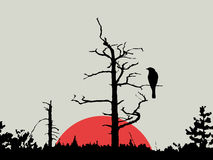 Птица на ветви Стоковая Фотография