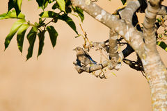 Птица на ветви стоковое фото rf
