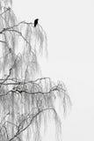 Птица на ветвях Стоковое Изображение RF