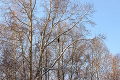 Птица на ветвях Стоковое Фото