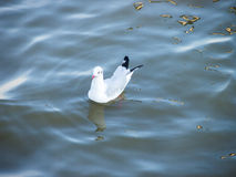 Птица на воде в daylighht стоковое фото rf