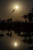 Птица над водой стоковые изображения rf