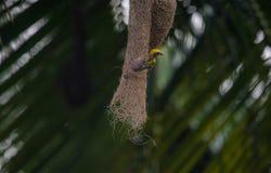 Птица на гнезде Стоковая Фотография