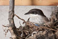 Птица на гнезде Стоковая Фотография RF