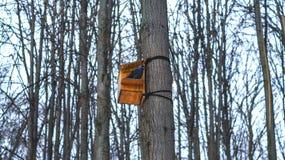 Птица на дереве в birdhouse в зиме Стоковые Изображения