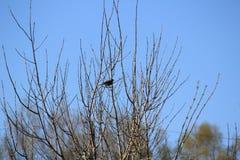 Птица на дереве стоковое изображение