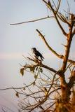 Птица на дереве, национальный парк Chitwan, Непал стоковые изображения