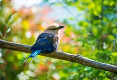 Птица на дереве Стоковые Фото