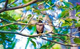 Птица на дереве Стоковые Изображения RF