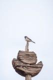 Птица на деревянной стойке с ясным небом Стоковое Изображение