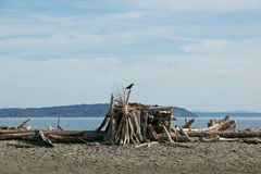 Птица на журналах пляжа Стоковые Фото