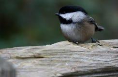 Птица на журнале Стоковая Фотография