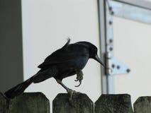 Птица на загородке Стоковое Изображение