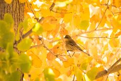 Птица на зареве желтого цвета лист падения дерева стоковое фото rf