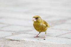 Птица на земле Стоковое Фото